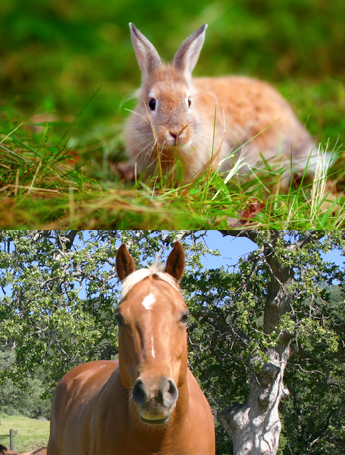 Rabbit and Horse